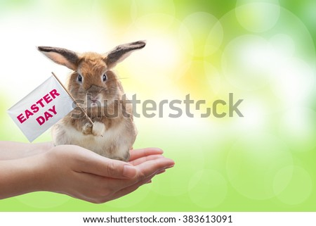 Two Hand holding a rabbit and Easter sign on green blur background in Easter day Concept - stock photo
