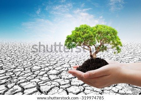 Two Hand holding young plant on the soil cracked background - stock photo