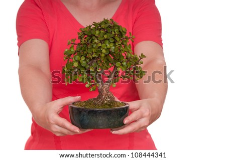 Two hands are holding a green bonsai tree - stock photo