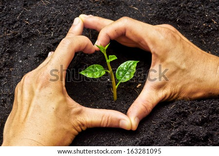 two hands forming a heart shape around a young green plant / planting tree