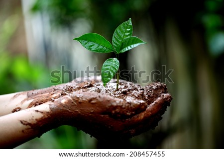 Two hands holding a young green plant - stock photo