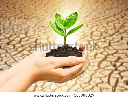 two hands holding and caring a young green plant with cracked earth background / planting tree / growing a tree / love nature / save the world - stock photo