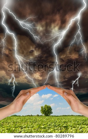Two hands preserve a green tree against a thunder-storm. Concept of preservation of the nature - stock photo