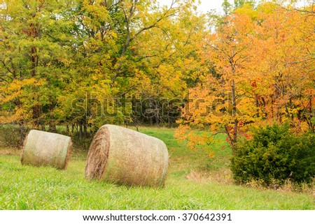 Two hay bales sitting in a field surrounded by trees with fall colors. - stock photo