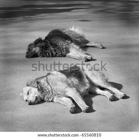 Two homeless dogs laying on road - stock photo