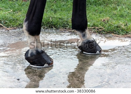Two hooves after water washing. - stock photo