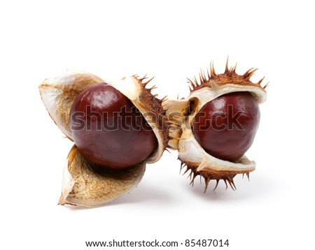 Two horse chestnuts close-up. Isolated on white background