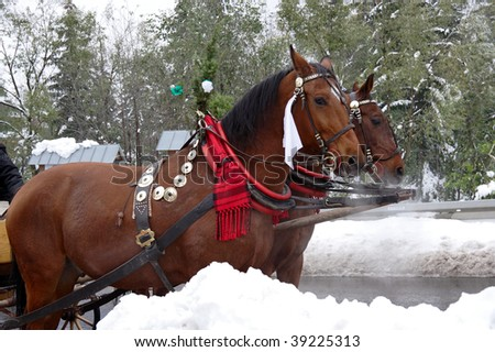 Two Horse-driven carriage. Zakopane-Poland - stock photo