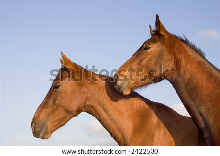 Two horse heads close to eachother looking to the left.