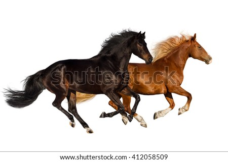 Two horse run gallop isolated on white background
