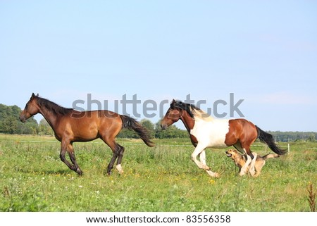 Two horses and dog running at the field - stock photo