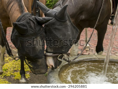 Two horses are stopping by a water fountain in a park. They began to show each other affection through their bug nets. - stock photo