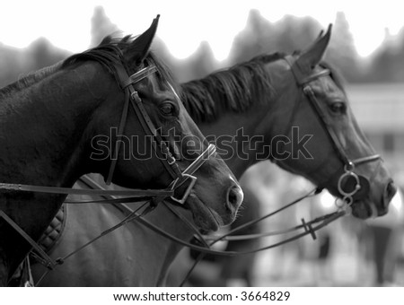 Two horses at local stable - stock photo