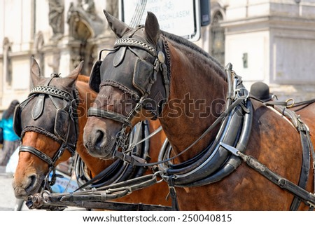 Two horses, close up, are harnessed to a cart for driving tourists In Prague Old Town Square. Czech Republic. - stock photo