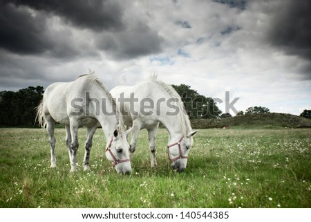 Two horses grazing in a field - stock photo
