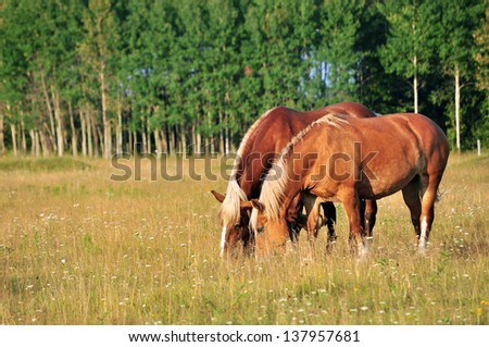 Two horses grazing in a pasture