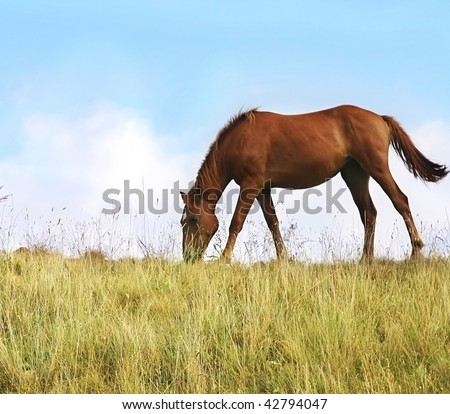 Two horses grazing in a pasture - stock photo