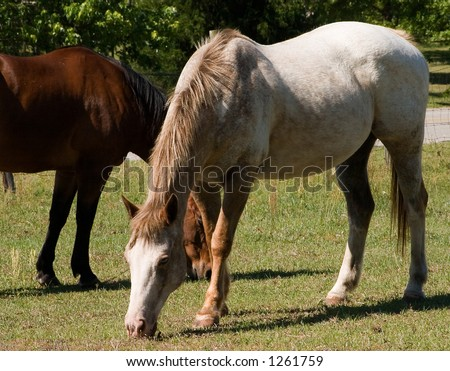 Two horses grazing in a pasture near the road - stock photo