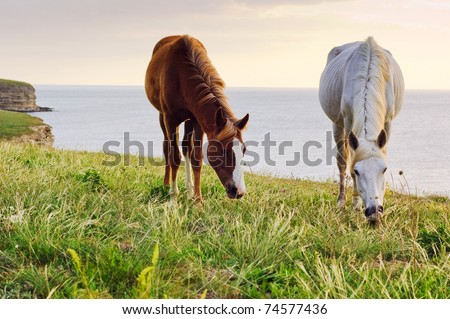 Two horses grazing on the green lush meadow near the sea - stock photo