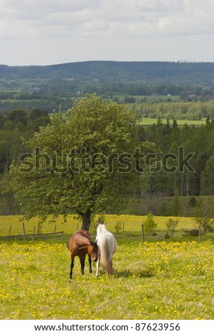 Two horses in a summer meadow - stock photo