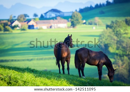 Two horses in field and mountains. - stock photo