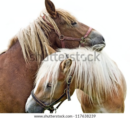 two horses in love - stock photo