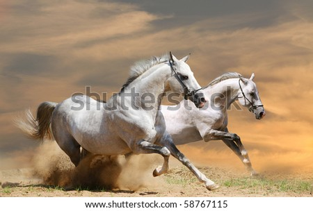 two horses in sunset - stock photo