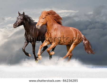 two horses in the snow with mountains behaind - stock photo