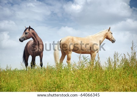 Two horses in the steppe. Colorful horizontal photo. Natural light and shadows