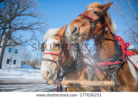 Two horses in winter - stock photo