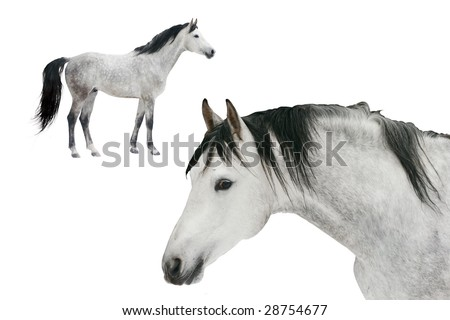 two horses isolated