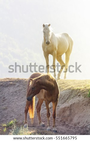 two horses on a river bank with the warm tranquil setting sunlight shining from behind them
