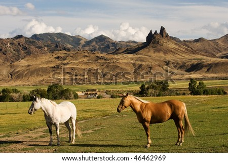Two horses on the ranch in rural Wyoming - stock photo