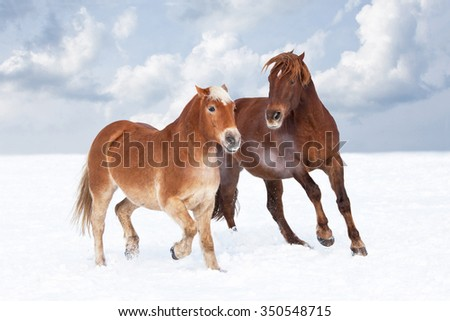 Two horses playing together in winter pasture - stock photo