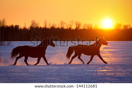 Two horses running at sunset - stock photo