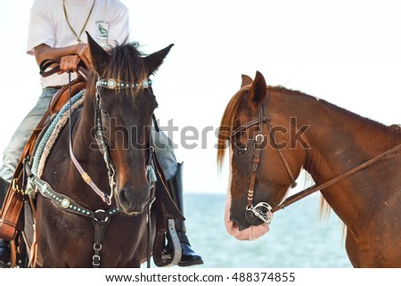 Two horses with dark brown and light brown on beach town for tourists.