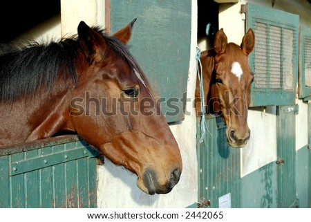 Two horses with the head outside of the stable. - stock photo
