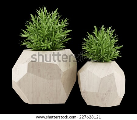 two houseplants in wooden pots isolated on black background - stock photo