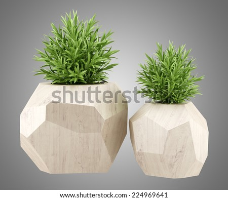 two houseplants in wooden pots isolated on gray background - stock photo