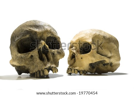 two human skulls over white background - stock photo