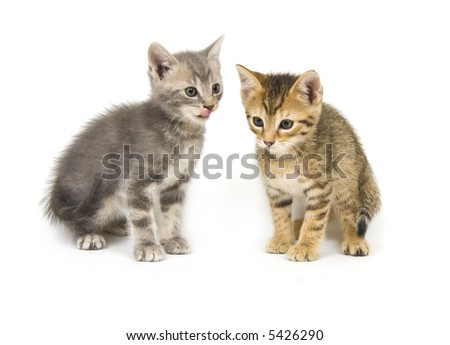Two hungry kittens on a white background - stock photo