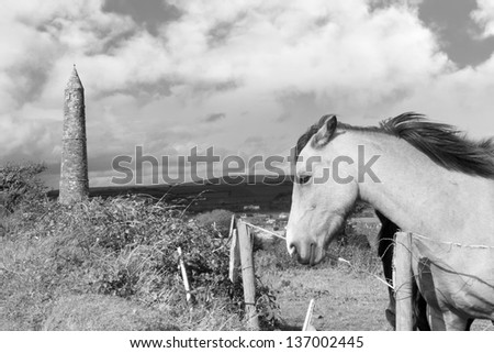 two Irish horses and ancient round tower in the beautiful Ardmore countryside of county Waterford Ireland black and white - stock photo