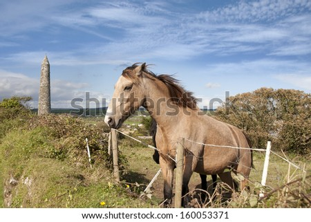 two Irish horses and ancient round tower in the beautiful Ardmore countryside of county Waterford Ireland - stock photo