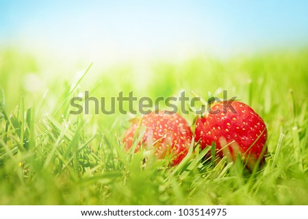 Two juicy strawberries on grass in front of a blue sunny sky.