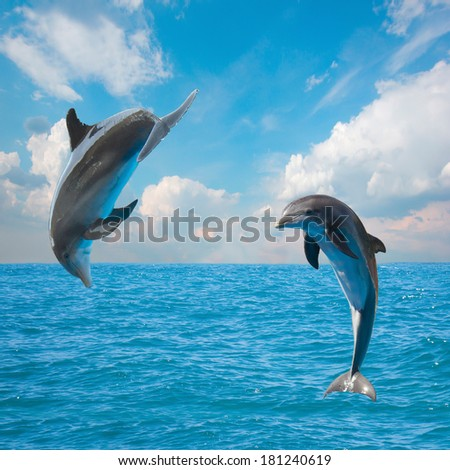 two  jumping dolphins,beautiful seascape with deep  ocean  waters and cloudscape - stock photo