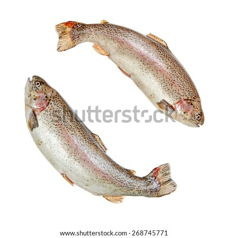 Two jumping rainbow trouts isolated over white background - stock photo
