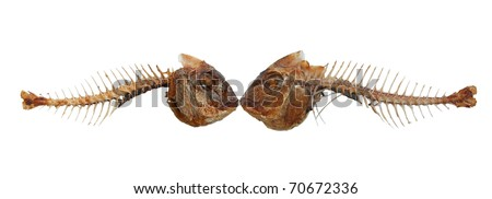 Two kissing fish skeletons - isolated against white background - stock photo