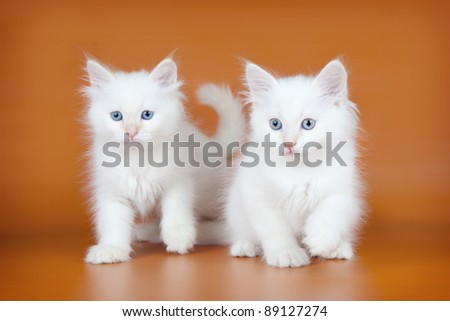 Two kitten on brown background - stock photo