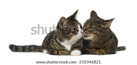 Two kittens - stock photo