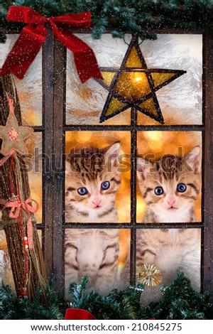 Two kittens / cats looking out a window with Christmas decorations - stock photo